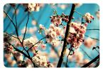 blossom_by_dideux