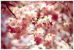 cherry_blossom_i_by_crazytob